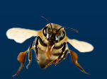 $50 Off Bee Hive Removal!
