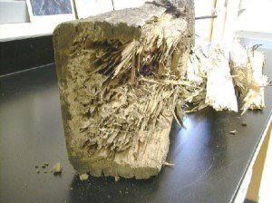 Home damage caused by Termites