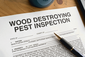termite home inspections