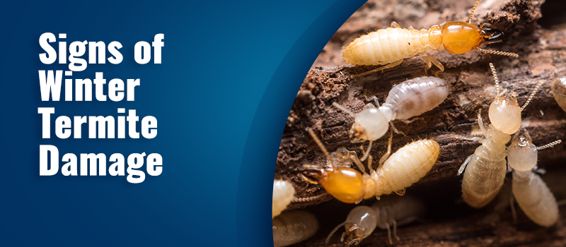 signs of winter termite damage