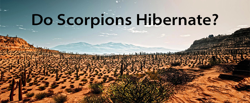 Do scorpions hibernate