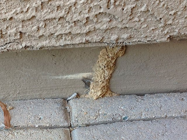 termite found on foundation in Phoenix Arizona