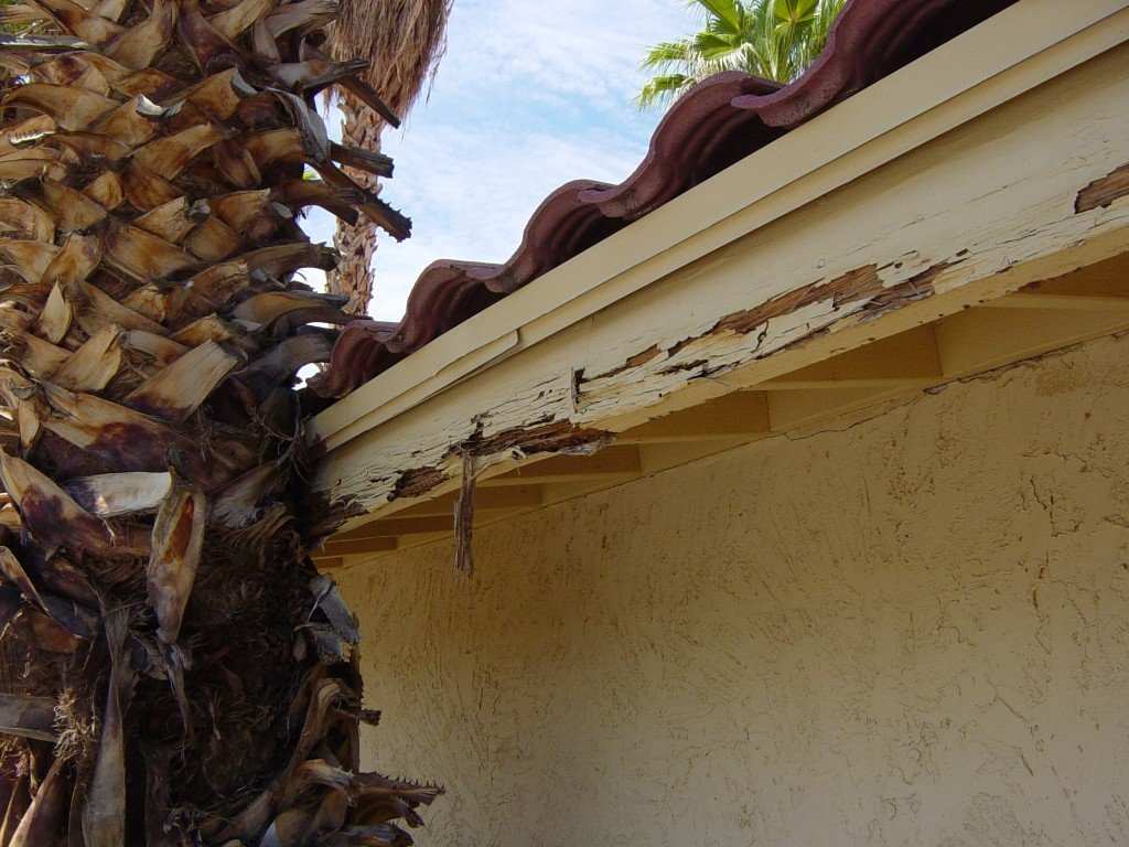 termite tube on foundation in Phoenix Arizona