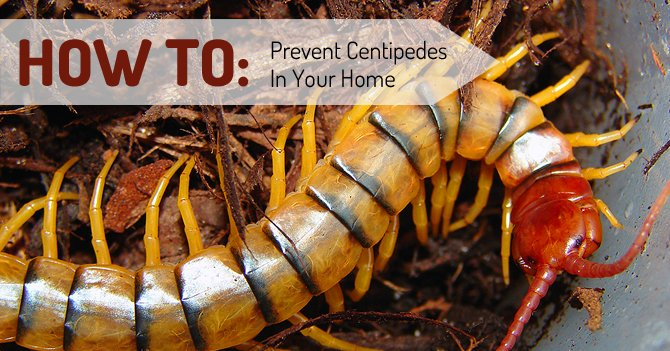 How To Prevent Centipedes