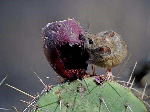Rodents Pest Control - Phoenix Metro Area   Blue Sky Pest
