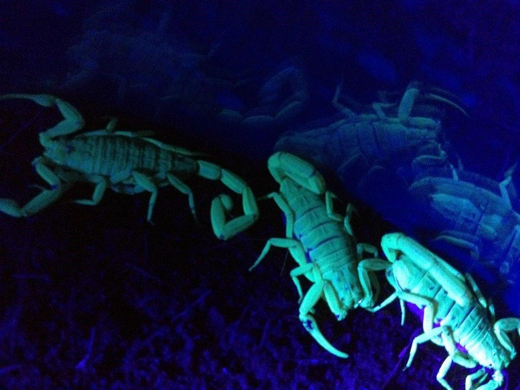 Scorpion Pest Control Services Phoenix Az