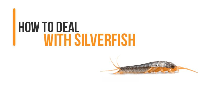 How To Deal With Silverfish
