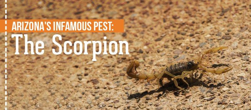 arizona scorpions