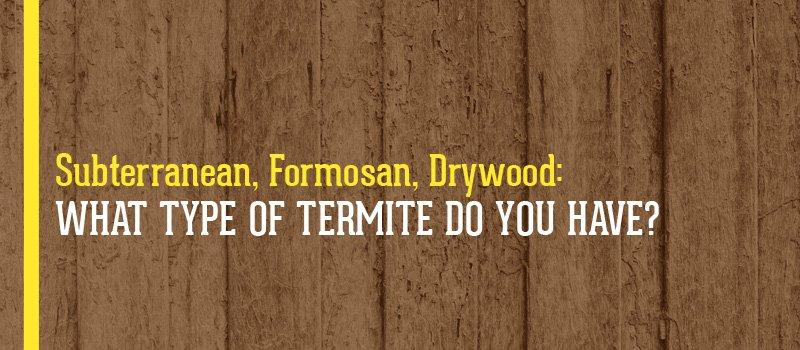 type of termites
