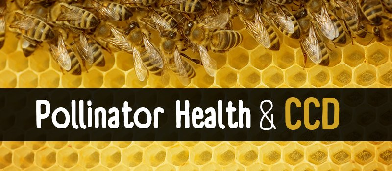 Pollinator Health and CCD
