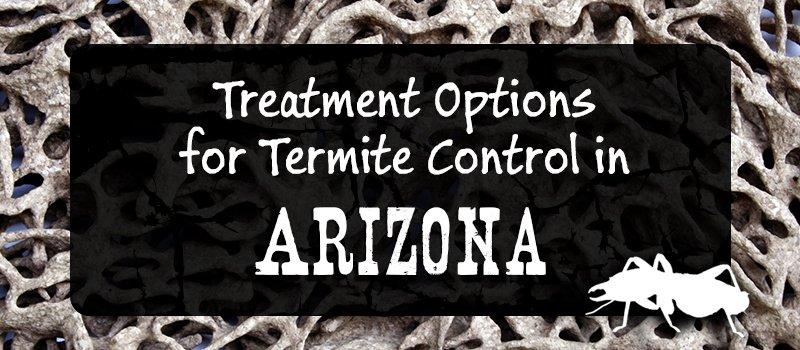 Termites Treatment Options