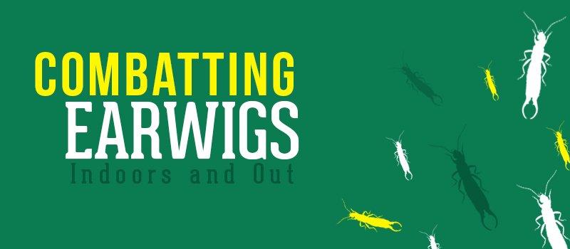 combatting earwigs