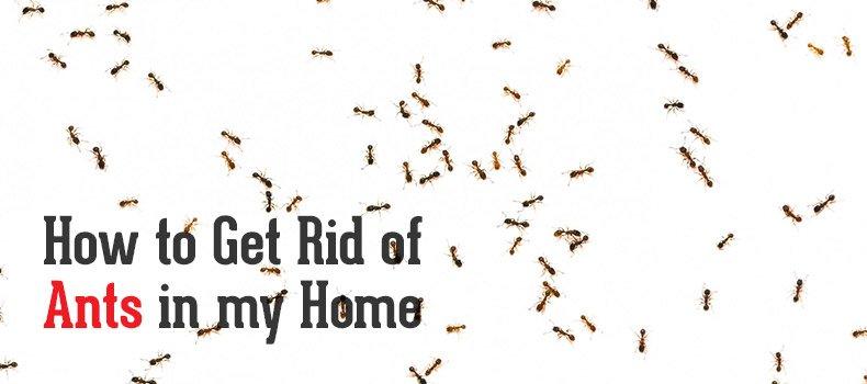 Blue Sky Blog Ants