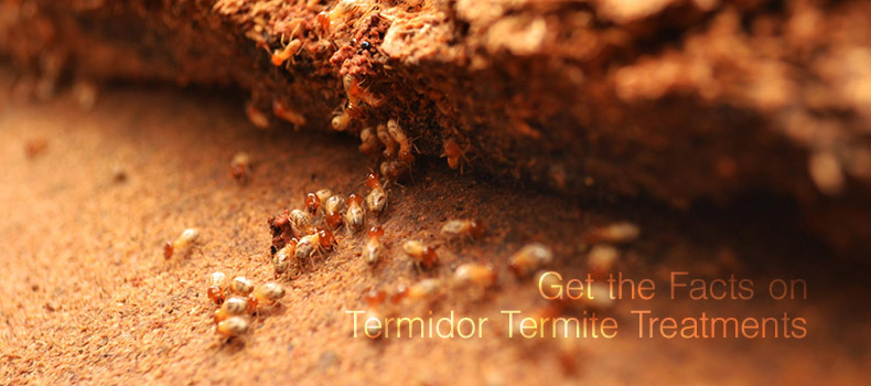 Get the Facts on Termidor Termite Treatments