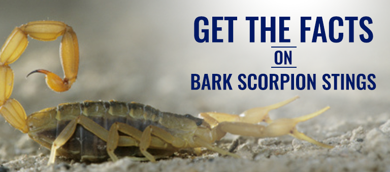 blog facts on scorpion stings