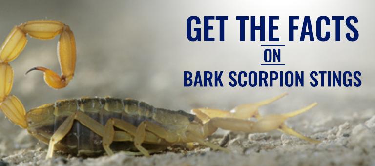 blog facts on scorpion stings