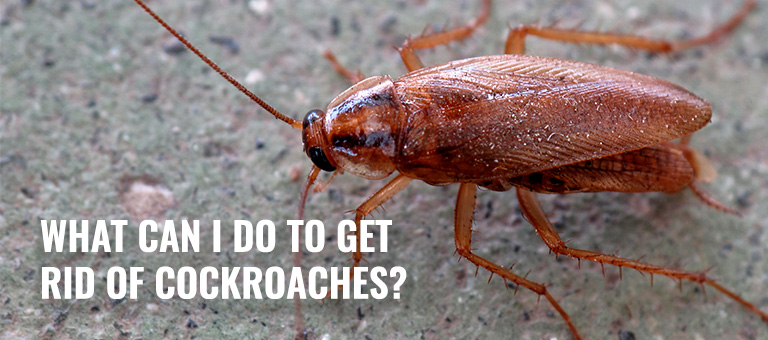 How to rid roaches from your home