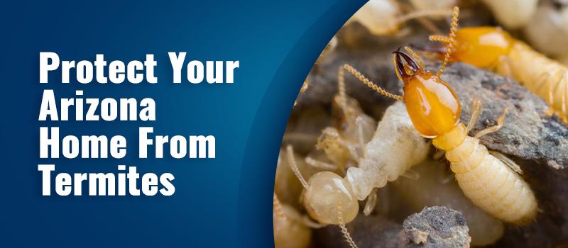 termite control in arizona